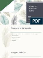 common bile duct (cbd)