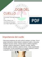 Semiología Del Cuello