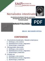 12 Ancylostoma, necator.ppt