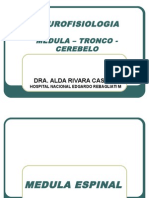 informacionsensorial-110227224426-phpapp02