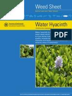 water-hyacinth-id-fact