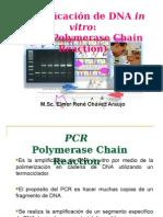 1 PCR