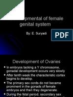 The Female Genital Organs Development