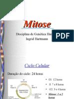 Mitose Ingrid Hartmann (Genetica)