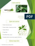 Ipecacuana