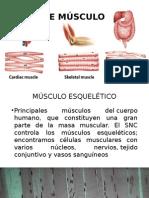 tipos de musculo