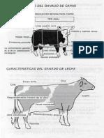 ganaderia32-2.pdf