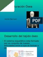 Maduracion Osea