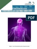 """""""Organización Anatómica Del Sistema Nervioso Central"""""""