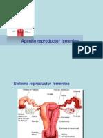 Reproductor Femenino Con Ciclo Menstrual