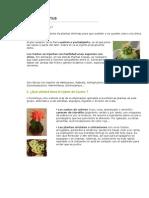 Botanica - Jardineria - Injerto de Cactus