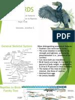 Evolution of Reptiles to Birds Paleontology