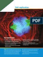 Chp 4 Cell Replication
