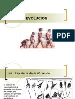 Apuntes Sobre La Evolucion Humana 2.0