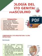 Histologia Del Aparato Genital Masculino