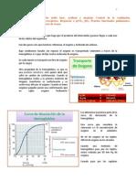 (15) Fisiología Equilibrio Ácido Base. Acidosis y Alcalosis. Control de La Ventilación, Quimiorreceptores. Respuesta a PCO2, PO2. Pruebas Funcionale