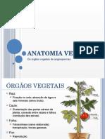 Anatomia Vegetal.pptx