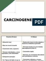 11 Tumores II Carcinogenesis