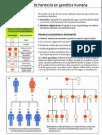 Tipos de Herencia en Genetica Humana