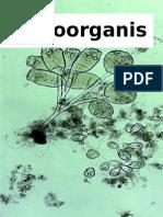 Microorganismos en Aguas Residuales