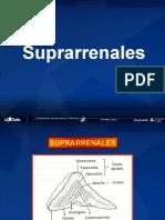 ENARM SUPRARRENALES