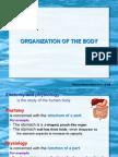 262703789 1 Organisasi Tubuh1 PDF