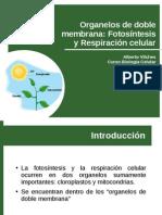 Clase 09 - Fotosíntesis y Respiración Celular