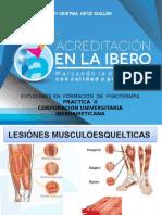 Cicatrización Lesion Del Musculo