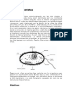 Células procariotas y eucariota