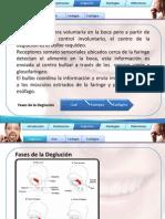 masticaci_n2.pdf