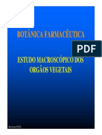 3ª Aula Estudo Macroscopico OrgVeget
