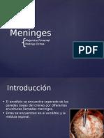 Meninges Sist Nervioso.pdf