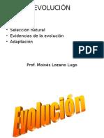 Evolución, Evidencias,Adaptación