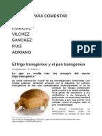 Trigo Transgénico y El Pan Transgenico