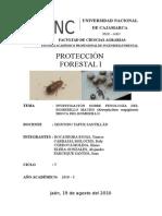 Informe Final Broca Del Romerillo