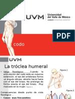 Codo.-Musculo-esqueletico-1 (1)