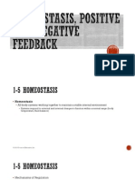 homeostasis pos feedback neg feedback pp for weebly
