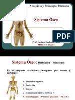 2[1]. Sistema Esqueletico