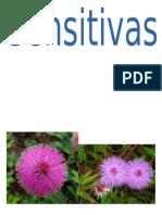Imagenes Fauna y Flora