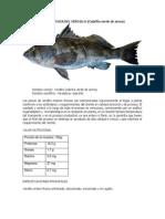 Verdillo PDF