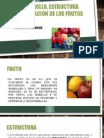 Estructura Clasificacion de Los Frutos