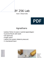 By 256 Lab Exam 1 Studyguide