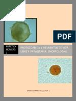 Practica_1_PARA_Protozoarios_y_helmintos.pdf