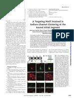 Canales de sodio en axones