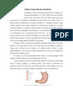 Anatomía e Fisiología Del Estomago