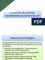 12 Producción de Proteínas Recombinantes