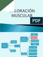 Valoración Muscular