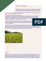 Principales Actividades Económicas de Cajamarca - Peru