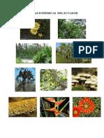 Plantas Endémicas Del Ecuador