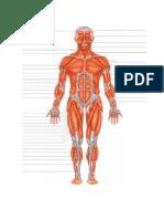 Musculos (Autoguardado)